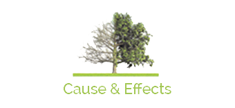 Cause and Effects